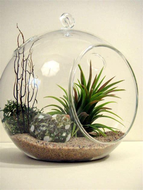 plant terrarium 17 best ideas about air plant terrarium on pinterest terrarium ideas terrarium and diy terrarium