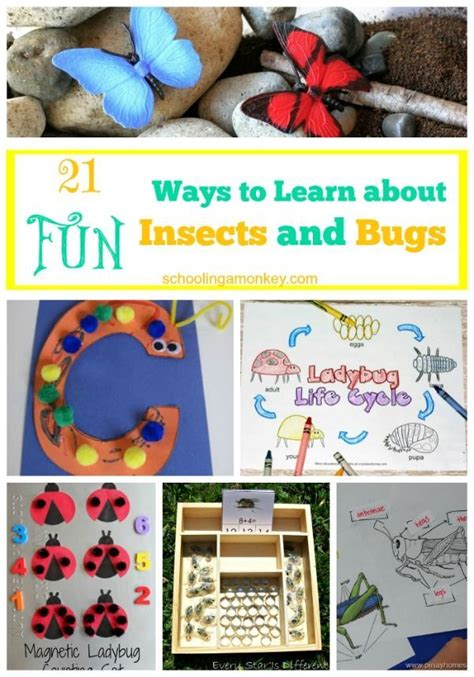 21 ways to learn about insects and bugs insects and 423 | faa778472ec97ee30c134202417b9232 science for kids preschool science