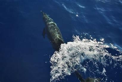 Dolphins Bottlenose Whitsundays Dolphin Underwater Boat Swimming