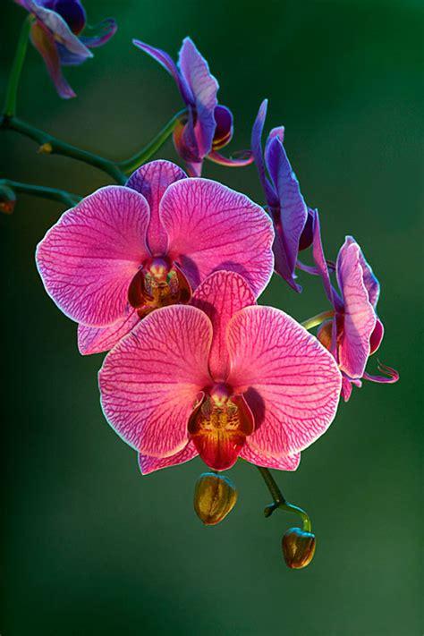 orchideen photoblog iso