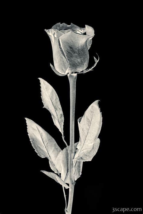 Silver Rose Photograph   Landscape & Travel Photography