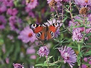 Schmetterlinge überwintern Helfen : wintergarten n tzlichen insekten und tieren gut durch den winter helfen wohnen ~ Frokenaadalensverden.com Haus und Dekorationen