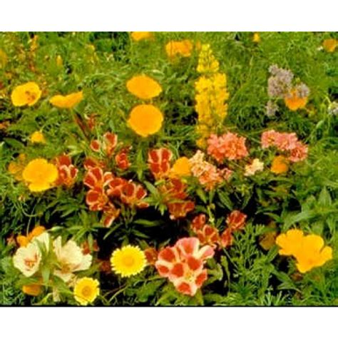 buy wildflower seeds pacific flowers