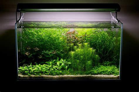 Modern Lighting System For Dutch Planted Aquarium