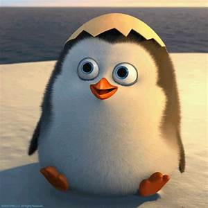 Penguins Of Madagascar GIFs - Find & Share on GIPHY