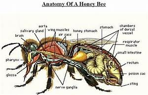 101 Fun Bee Facts About Bees And Beekeeping