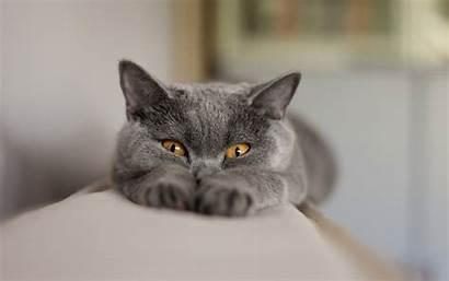 Funny Wallpapers Cat Cats Cool Desktop