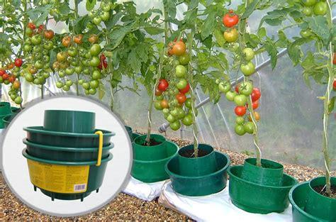 pots facilitant l arrosage les tomates sous serre