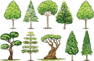 different types of trees stock vector 635949946 istock