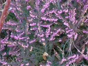 Welche Pflanzen Kann Man Im Herbst Pflanzen : winterharte geranien pflanzen das sollten sie beachten ~ Articles-book.com Haus und Dekorationen