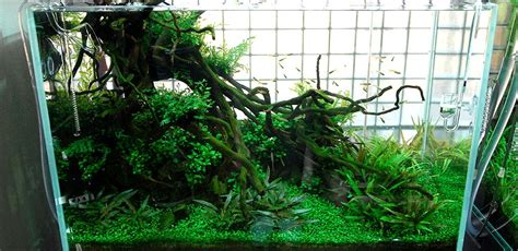 Nature Aquascape by Nature Aquariums And Aquascaping Inspiration