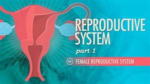 Reproductive System  Part 1