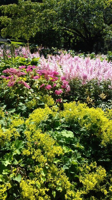 shade plants canada 61 best images about stanley park vancouver my pictures on pinterest parks summer time and