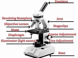 Microscope Diagram For Kids