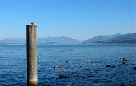 Boat Insurance Zurich by One Big Yodel Paddle Boat On Lake Zurich