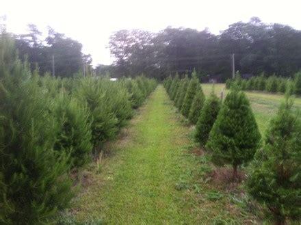 hours of operation hughes christmas tree farm