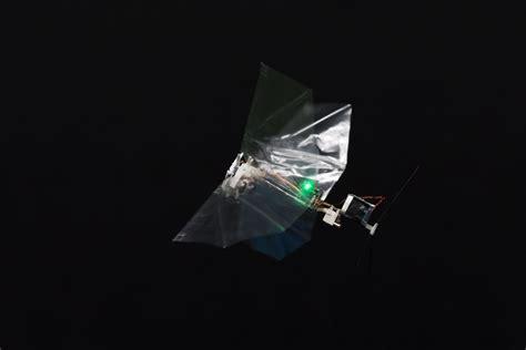 roboter fliege forscher imitieren flugfaehigkeit von