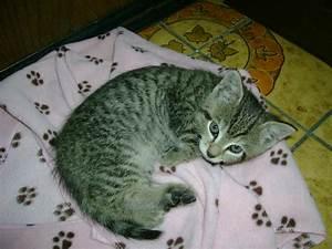 Was Brauchen Katzen : katzen brauchen eiwei und turin keine milch ~ Lizthompson.info Haus und Dekorationen