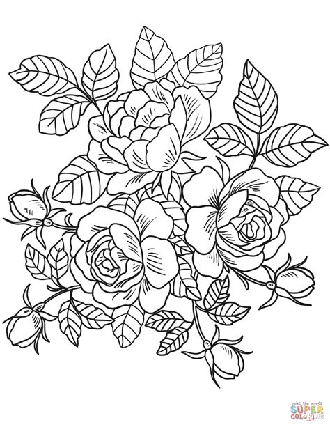 roses flowers coloring page  printable coloring pages