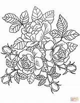 Coloring Flowers Roses Printable Paper Drawing sketch template