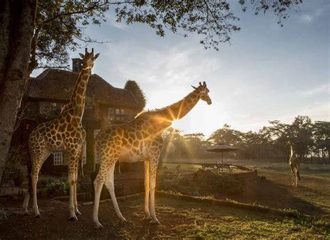 giraffe manor  safari collection