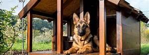 Hundehütten Selber Bauen : hundeh tte selber bauen die ultimative bauanleitung f r anf nger ~ Eleganceandgraceweddings.com Haus und Dekorationen