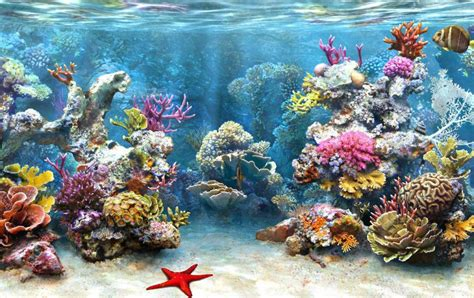 coral reef wallpaper coral reef 3d underwater wallpapers images photos pictures Underwater