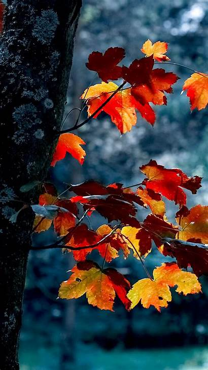 Fall Autumn Iphone Aesthetic Phone Wallpapers Backgrounds