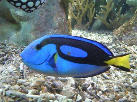 poissons exotiques d aquarium poisson exotique aquarium images