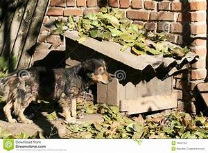dog kennel near me dog near the kennel stock photography With dog boarding kennels near me