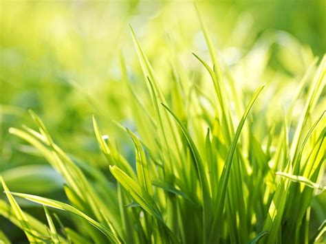 sun green grass plants photography wallpaper