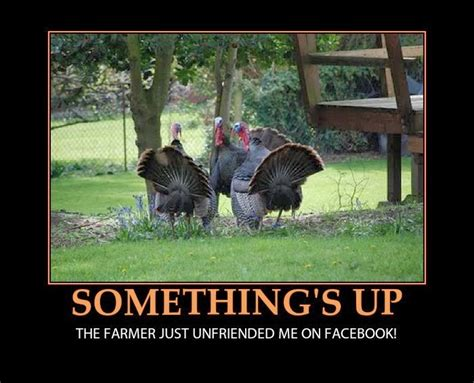 Turkey Memes - happy funny thanksgiving 2017 funny thanksgiving pictures and cartoons 2013