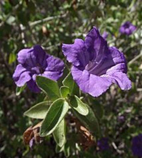 unbedenkliche pflanzen für katzen ungiftige pflanzen f 252 r katzen eine umfangreiche sammlung