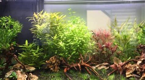 pourquoi l eau de mon aquarium est trouble