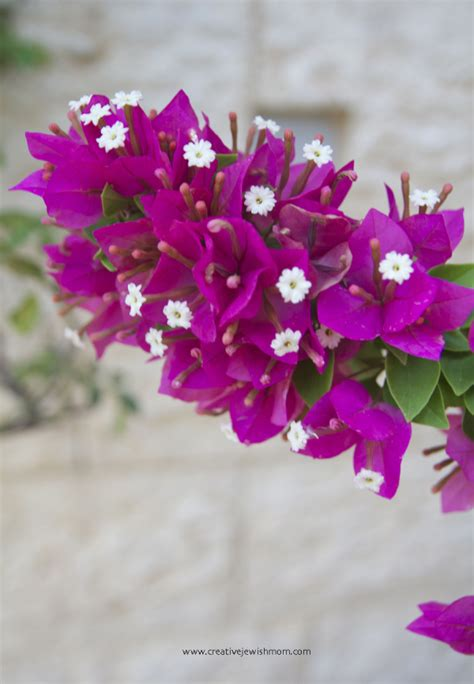 easy care flowering plants    tropical