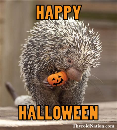 Happy Halloween Meme - happy halloween meme thyroid nation thyroid nation