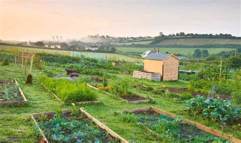 Alan Titchmarsh's Tips On Growing Your Own Fruit And Veg