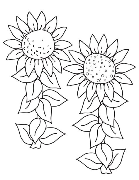 sunflower coloring pages   coloring pages