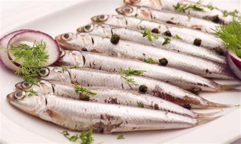 poisson à cuisiner comme un poisson dans l 39 eau 7 recettes pour cuisiner les anchois trucs pratiques