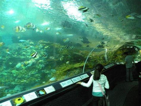 aquarium des deux oceans uno squalo dell acquario picture of shanghai aquarium shanghai tripadvisor