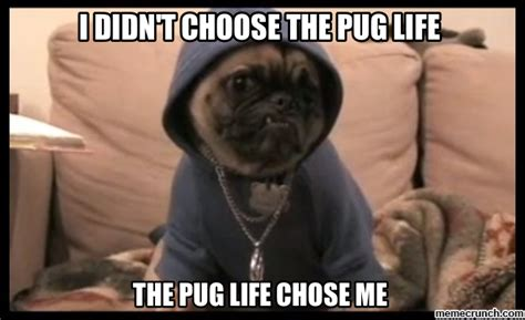 Pug Meme - pug life meme memes