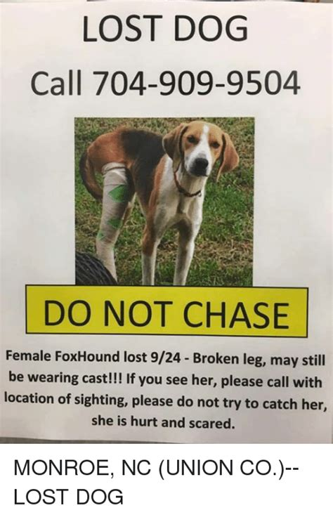 Lost Dog Meme - lost dog call 704 909 9504 do not chase female foxhound lost 924 broken leg may still be
