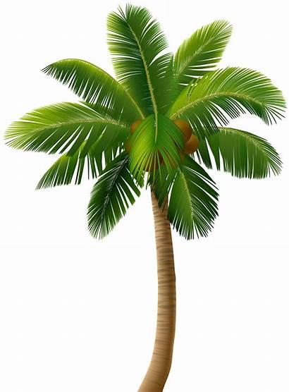 Palm Tree Clip Trees Clipart Transparent Banana