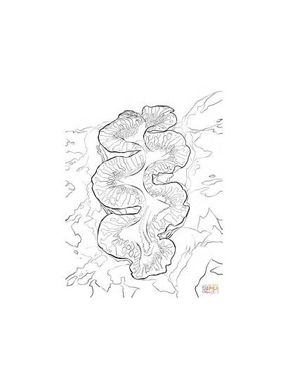 Coloring Pages Clam Giant Printable Drawing