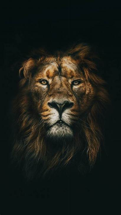 Lion Wallpapers Phone Animal Funny Iphone Leao