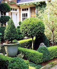 great boxwood garden design Boxwood plants and gardens – look wonderful in terracotta ...