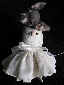 Custom couture dog wedding dresses for Dog wedding dresses