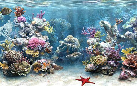 Marine Life Sea Life Photo 7591167 Fanpop