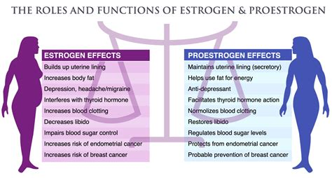 Facts About Estrogen The World Of Estrogen