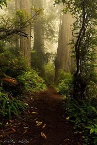 Enchanted Forest - Tumblr   Fabulous Trees, Forests ...
